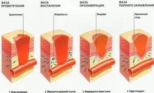 Регенирация кожи поэтапно
